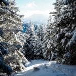 Allgäu Alpsee Bergwelt