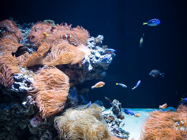 Aquarium in Lissabon