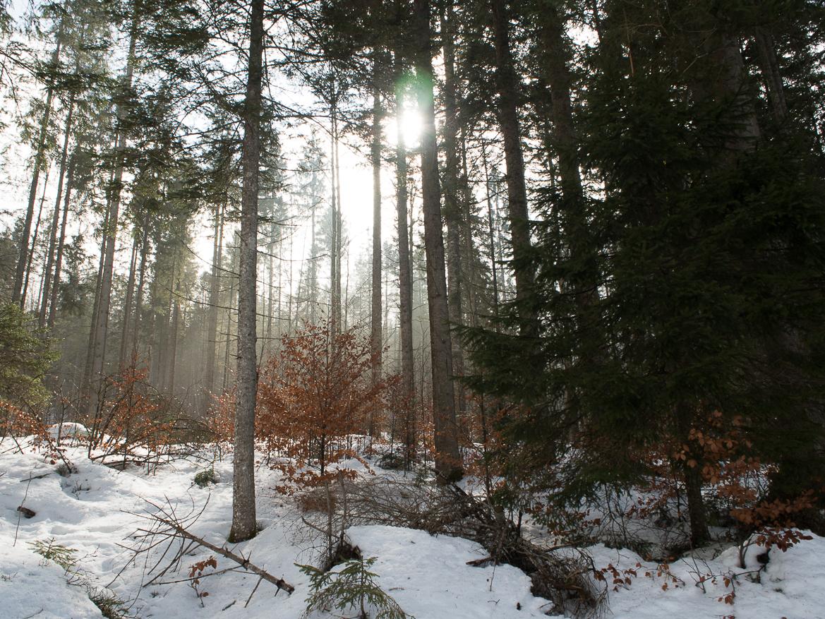 Wald am Eibsee